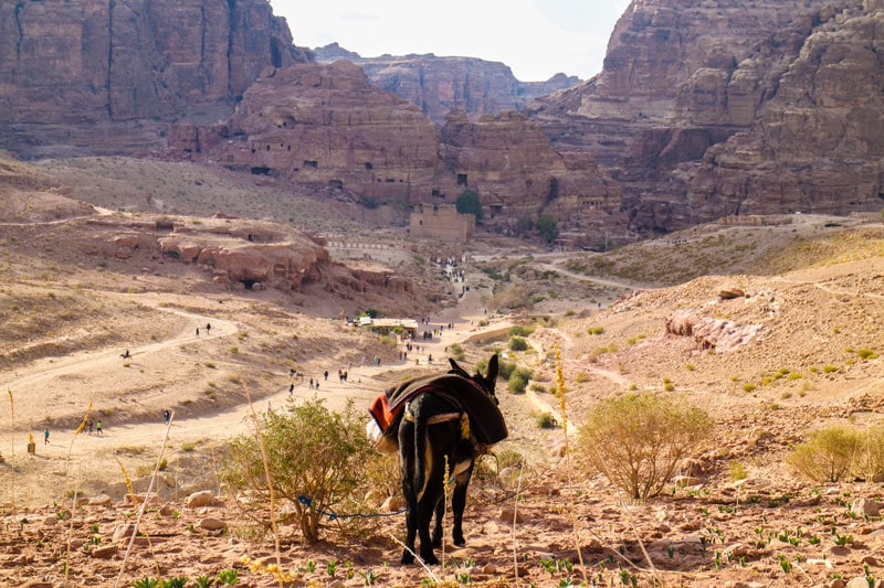 A donkey looks on as tourists walk around Petra