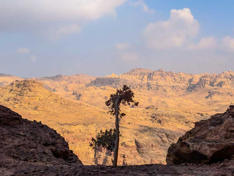 Huge Valleys near Petra with a lonely tree