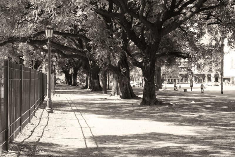 Avenida Libertador Buenos Aires