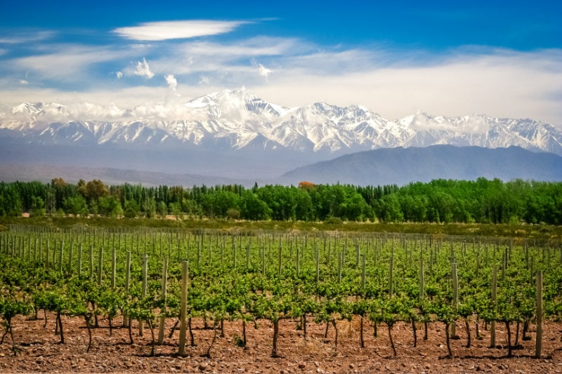 vineyards and mountains near mendoza