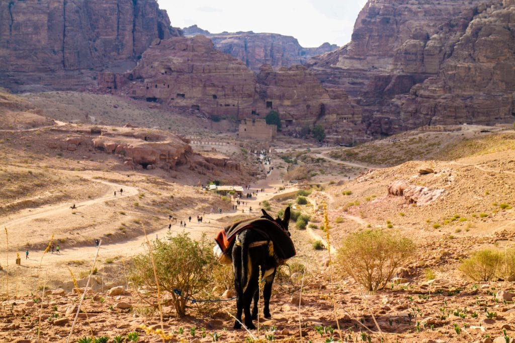 A lone donkey looks on as tourists walk in Petra
