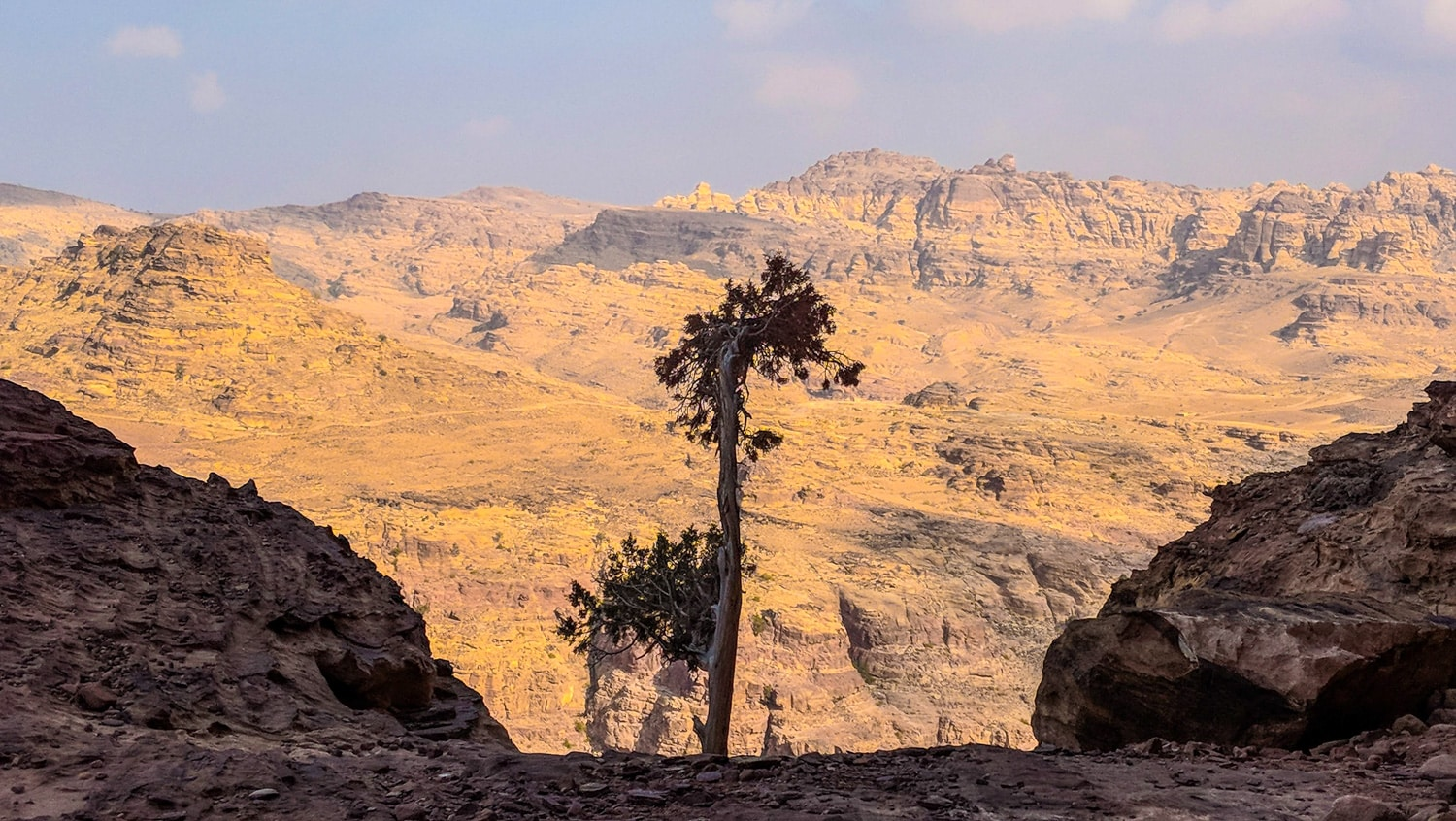 A lonely tree in front of wide valley near Petra Jordan
