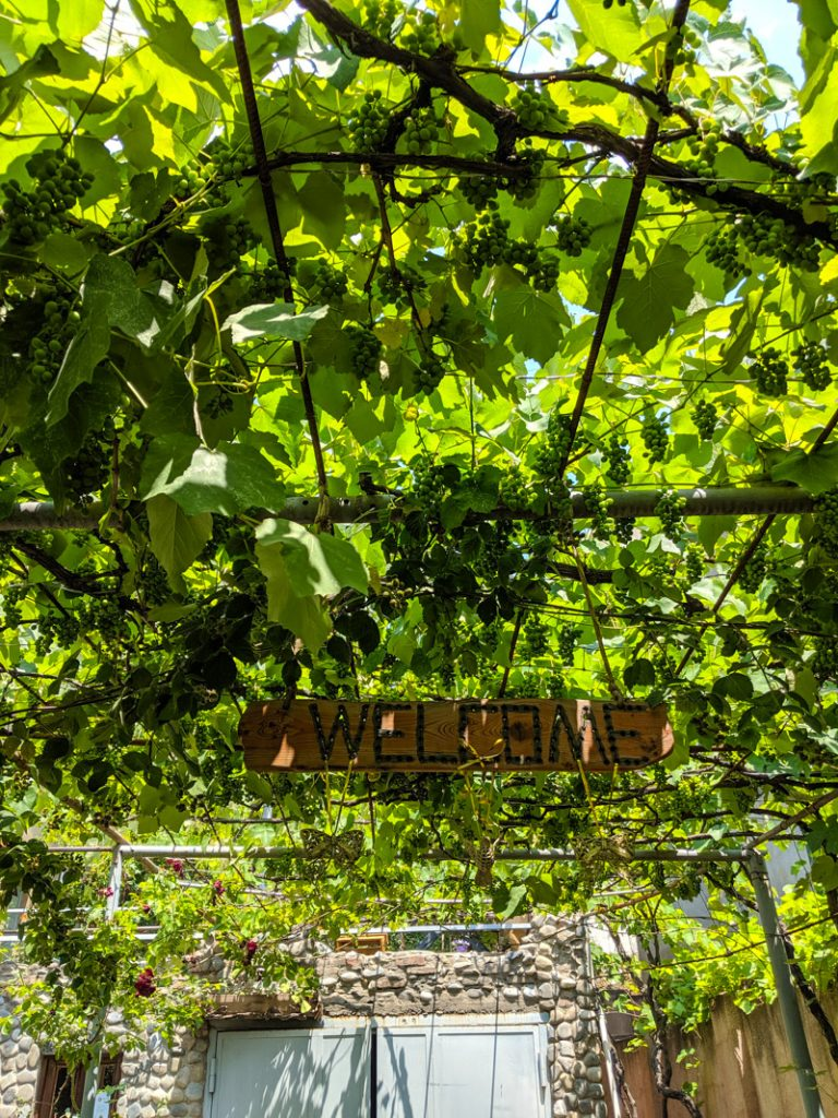 vines in garden of house